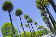 «Калифорния стайл» - индивидуальная экскурсия по ЛА на кабриолете (фото 8)