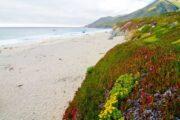 «Пляжный калейдоскоп» - экскурсия по самым живописным пляжным районам Калифорнии (фото 8)