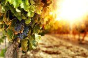 «Попробуй Малибу на вкус» - винная экскурсия из Лос-Анджелеса в Малибу (фото 8)