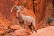 «Будет жарко!» - экскурсия из Лас-Вегаса в -заповедник «Долина Огня» (фото 4)