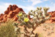 «Будет жарко!» - экскурсия из Лас-Вегаса в -заповедник «Долина Огня» (фото 5)