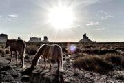 «Дикий, дикий Запад!» - экскурсия из Лас-Вегаса в каньон Эльдорадо (фото 3)