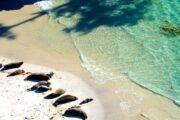 «Другой уровень» - вертолетная экскурсия над побережьем Кармел и Монтерей (фото 2)