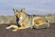 Экскурсия из Лас-Вегаса в Долину Смерти «Загадки пустыни» (фото 7)