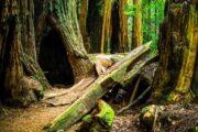 «Главный экспонат» - обзорная экскурсия по Сан-Франциско + поездка в парк секвой «Муир Вудс» (фото 3)