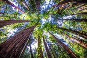 «Главный экспонат» - обзорная экскурсия по Сан-Франциско + поездка в парк секвой «Муир Вудс» (фото 4)