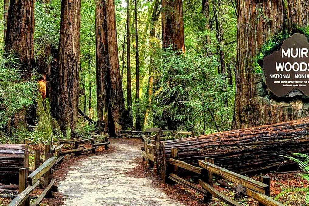 «Главный экспонат» - обзорная экскурсия по Сан-Франциско + поездка в парк секвой «Муир Вудс» (превью)