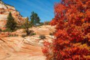 «Картина маслом» - экскурсия из Лас-Вегаса в национальный парк Зайон (фото 4)