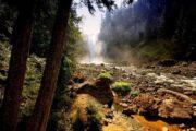 «Любой каприз» - экскурсия из Сиэтла: водопад Сноквалми + Майкрософт + город Белвью (фото 2)