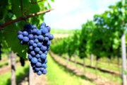 «На рассвете дня» - полет на воздушном шаре над долиной Темекула + дегустация вина на винодельне (фото 2)