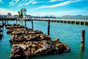 «Обыкновенное чудо» - экскурсия по Сан-Франциско (фото 4)