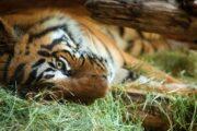 «От классики до экзотики» - экскурсия по городу Сан-Диего + посещение зоопарка (фото 2)