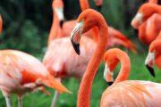 «От классики до экзотики» - экскурсия по городу Сан-Диего + посещение зоопарка (фото 3)