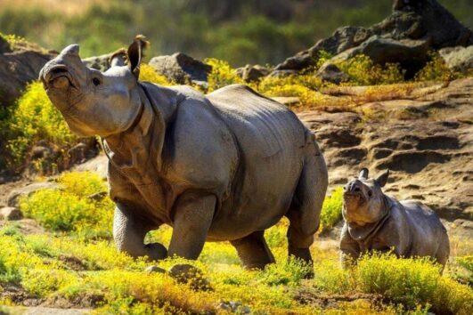 «От классики до экзотики» - экскурсия по городу Сан-Диего + посещение зоопарка (превью)