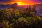 «По зову природы» - экскурсия из Сан-Франциско в национальный парк Йосемити (фото 2)