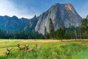 «По зову природы» - экскурсия из Сан-Франциско в национальный парк Йосемити (фото 7)