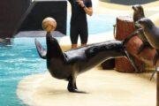 «Пятый элемент» - экскурсия по Сан-Диего + посещение парка «Морской мир» (фото 1)