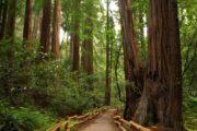 «Самый лучший день» - экскурсия из Сан-Франциско в долину Напа и парк секвой «Муир Вудс» (фото 2)