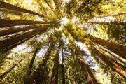 «Самый лучший день» - экскурсия из Сан-Франциско в долину Напа и парк секвой «Муир Вудс» (фото 3)