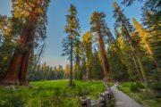 «Тропа великанов» - экскурсия из Лос-Анджелеса в национальный парк «Секвойя» (фото 1)