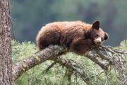 «Тропа великанов» - экскурсия из Лос-Анджелеса в национальный парк «Секвойя» (фото 2)