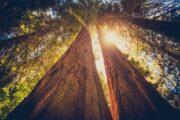 «Тропа великанов» - экскурсия из Лос-Анджелеса в национальный парк «Секвойя» (фото 3)