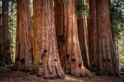 «Тропа великанов» - экскурсия из Лос-Анджелеса в национальный парк «Секвойя» (фото 5)