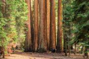 «Тропа великанов» - экскурсия из Лос-Анджелеса в национальный парк «Секвойя» (фото 7)