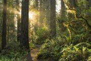 «Тропа великанов» - экскурсия из Лос-Анджелеса в национальный парк «Секвойя» (фото 8)