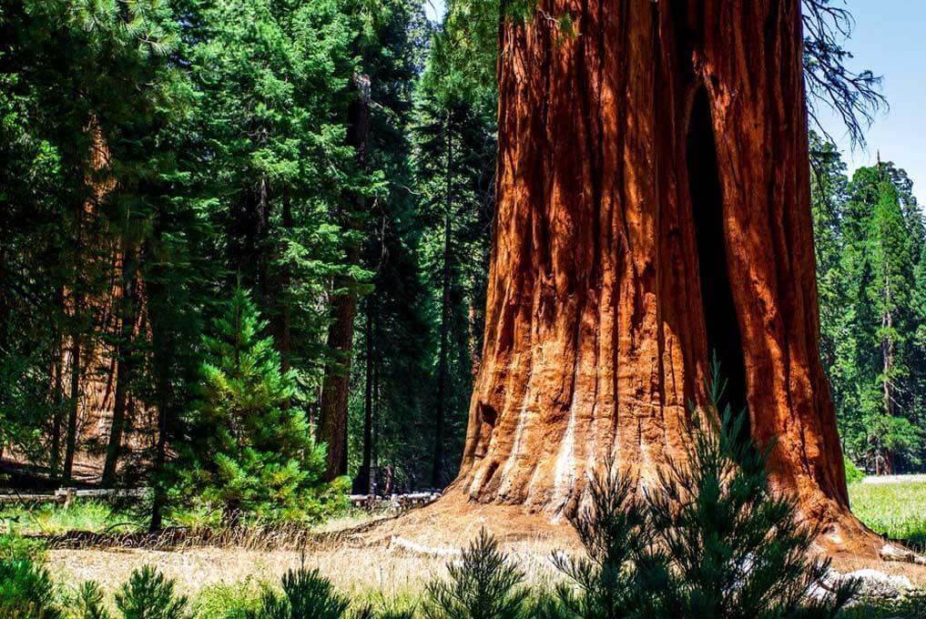 «Тропа великанов» - экскурсия из Лос-Анджелеса в национальный парк «Секвойя» (превью)