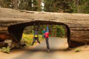 «Неразлучная пара» - тур из ЛА в национальные природные заповедники Йосемити и Секвойя (фото 2)