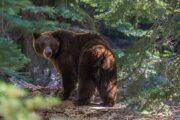 «Неразлучная пара» - тур из ЛА в национальные природные заповедники Йосемити и Секвойя (фото 3)