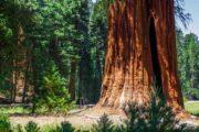 «Производит впечатление!» - тур из Сан-Франциско по заповедникам Йосемити и Секвойя (фото 3)