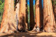 «Производит впечатление!» - тур из Сан-Франциско по заповедникам Йосемити и Секвойя (фото 4)