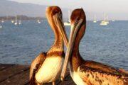 «Страсти по океану» - тур вдоль тихоокеанского побережья по калифорнийскому хайвею (фото 5)