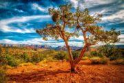 «В натуральную величину» - Тур из Лас-Вегаса по национальным паркам: Зайон, Брайс, Гранд Каньон и городу Седона (фото 2)