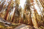 «Золотой штат» - тур по национальным паркам и городам Калифорнии (фото 8)