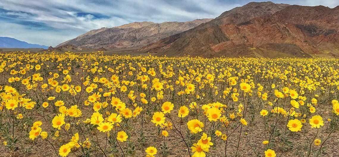 Ожившая Долина Смерти - настоящее природное чудо