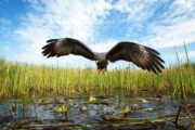 «Секреты аллигаторов» - экскурсия в национальный парк Эверглейдс (фото 5)