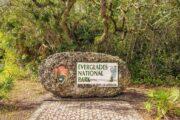 «Секреты аллигаторов» - экскурсия в национальный парк Эверглейдс (фото 9)