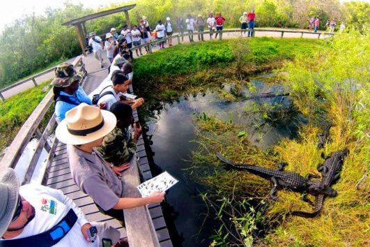 Экскурсия в парк Эверглейдс «Секреты аллигаторов» (превью)