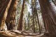 Тур из Лас-Вегаса в Сан-Франциско «Ближе к природе» (фото 5)